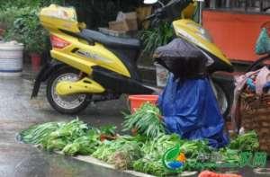 福建厦门 台风致蔬菜减收 菜价应声上涨